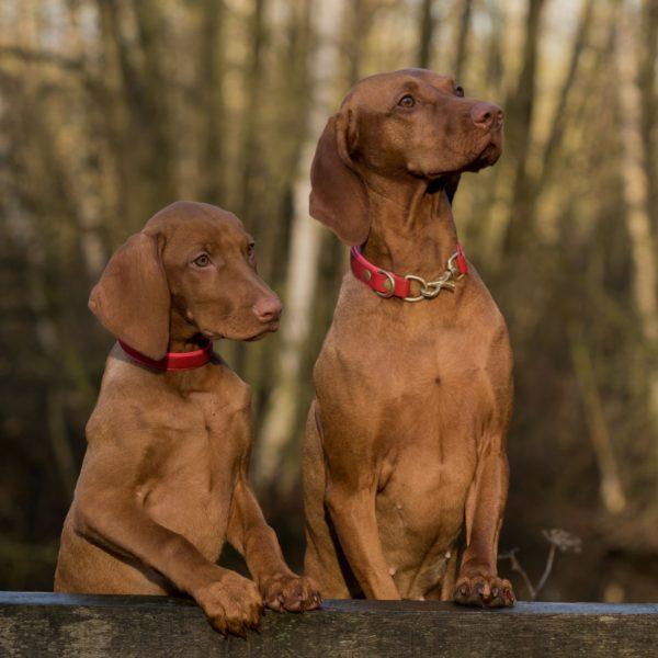 dos-perros